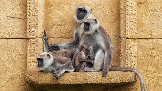 Feng Shui mois du singe