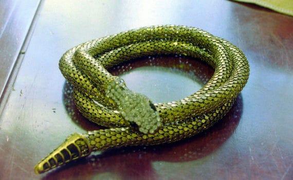 Serpent année du Chien