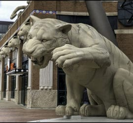 Année du Cochon de Terre, horoscope du Tigre